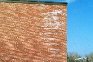 Saltutslag på murvegg pga. fukt